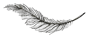 hunter-vallery-weddings-feather